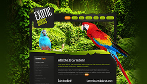 Birds Website